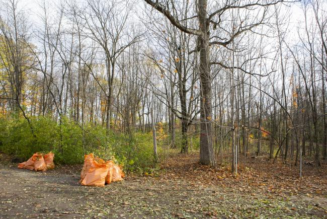 8- Border of land invaded by buckthorn and after young people's cutting