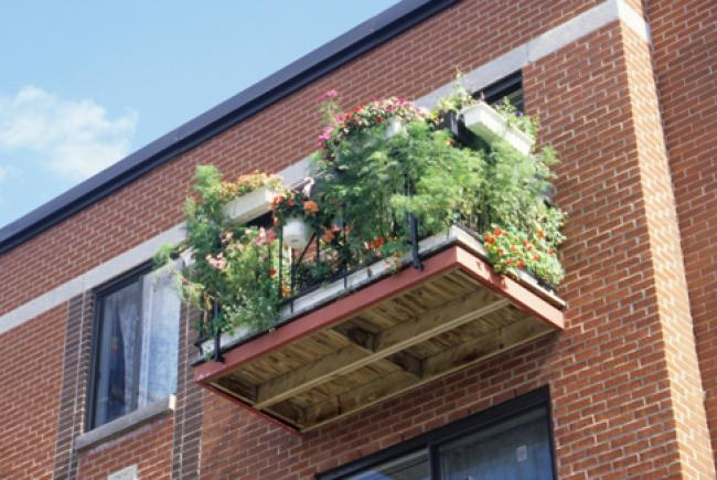 Balcon fleuri © Jardin botanique de Montréal (Lise Servant)