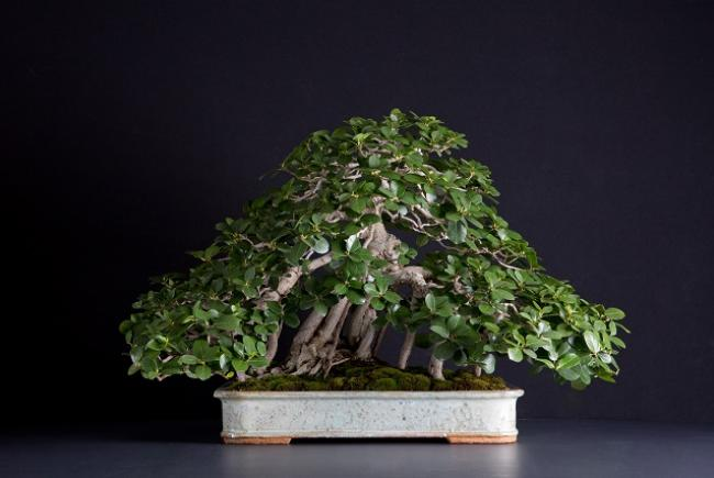 Summer In Montreal Make It Tropical With Our Seasonal Bonsai Display Blog Space For Life