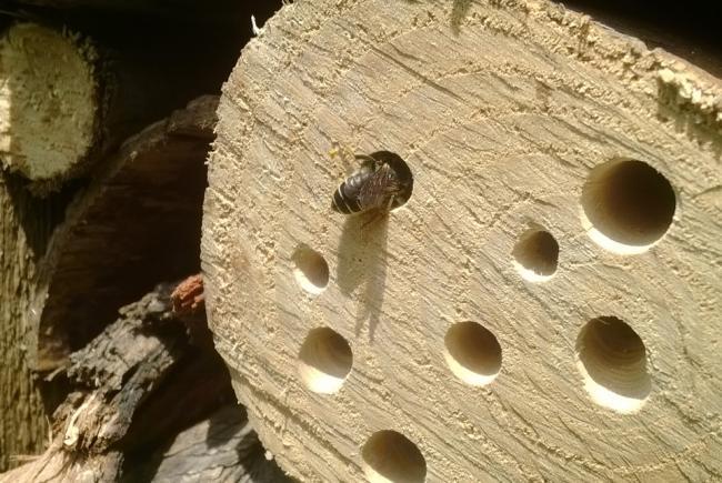 Hôtel à insectes de l'Insectarium