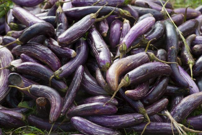Eggplants, heritage varieties