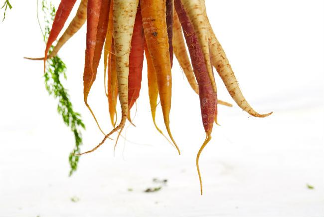 Carrots, heritage varieties