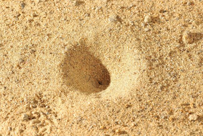 piège de la larve du fourmilion