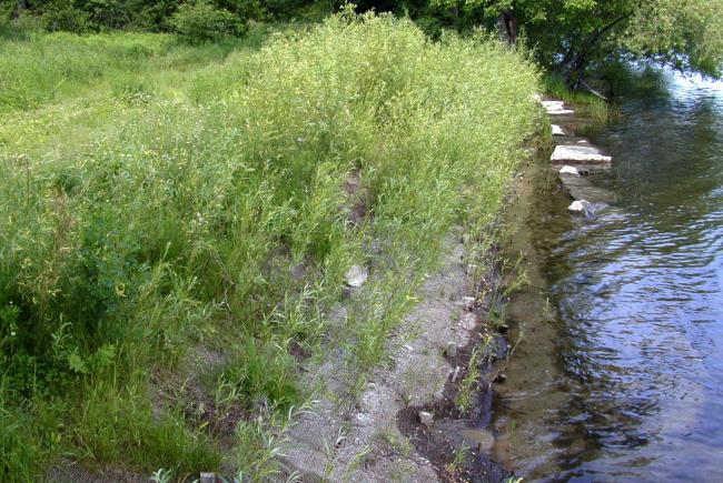 Bank stabilization helps prevent further erosion