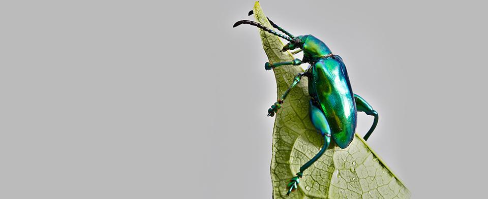 Un insecte grenouille ça existe!? - Carrousel