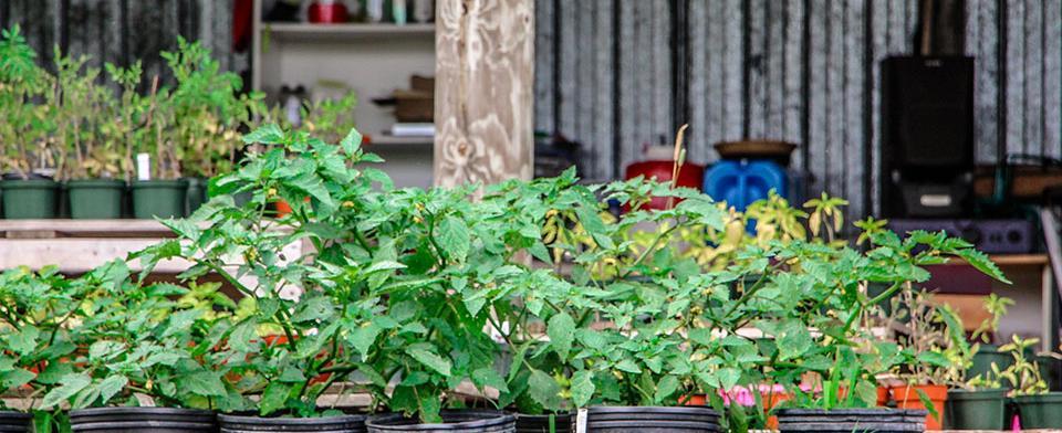 Some harvests of Jardins Lakou.