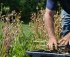 Petit lexique pour le choix de vos semences