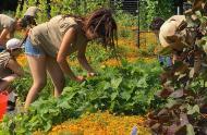 Les légumes à privilégier en temps de crise - carrousel