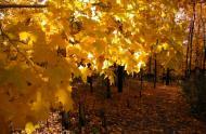 Autumn colors © Jardin botanique de Montréal (Michel Tremblay)