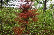 Dead fir tree © Espace pour la vie (Pascale Maynard)