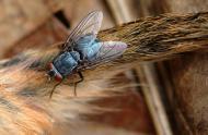 insectes-decomposeurs-carrousel.jpg