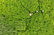 Vegetation sampling, îles-de-Boucherville, in anticipation of drones/airplanes, July 2018.