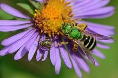 Le service des renseignements entomologiques : pour découvrir les insectes qui vous entourent! - carrousel