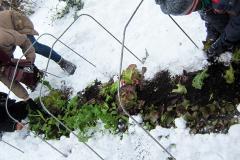 Jardinez-vous par temps froid? Période : novembre 2020
