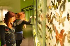 Visitors to the Insectarium