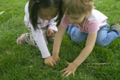 À la recherche de l'insecte