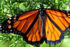 Les insectes : de précieux alliés dont il faut rapidement se soucier !