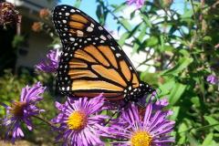 Papillon carrousel