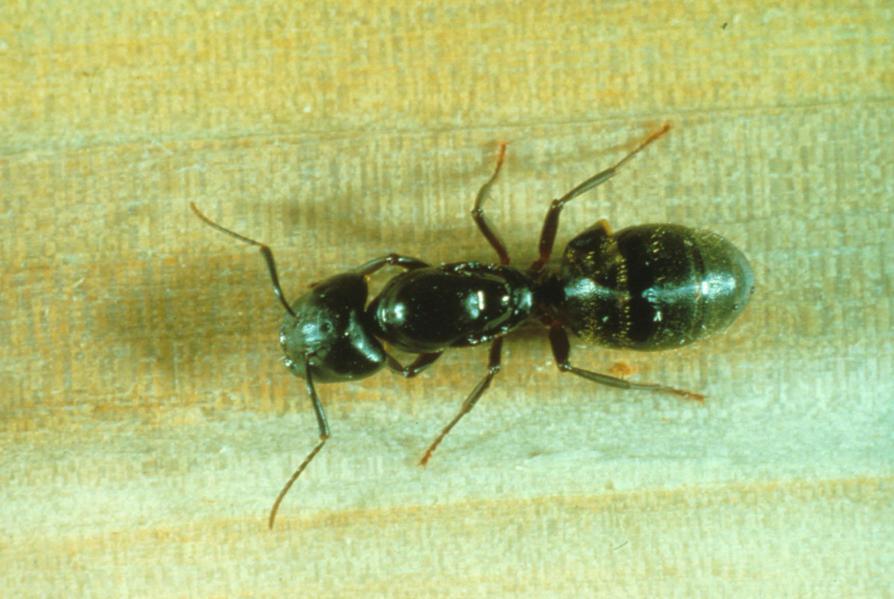 Eloigner Les Fourmis Au Jardin des fourmis dans la maison | espace pour la vie