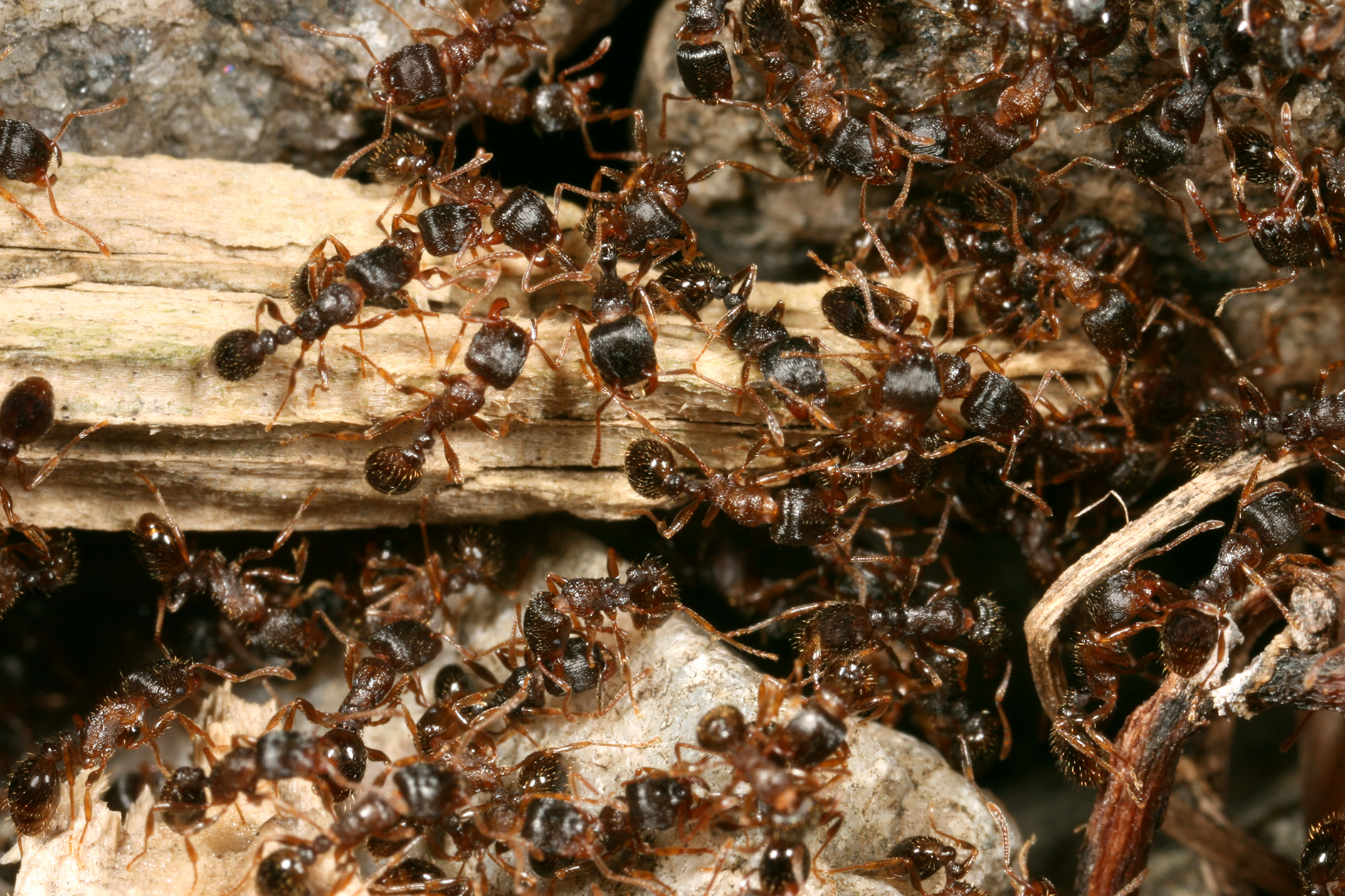 Eloigner Les Fourmis Au Jardin comment trouver un nid de fourmis? | espace pour la vie