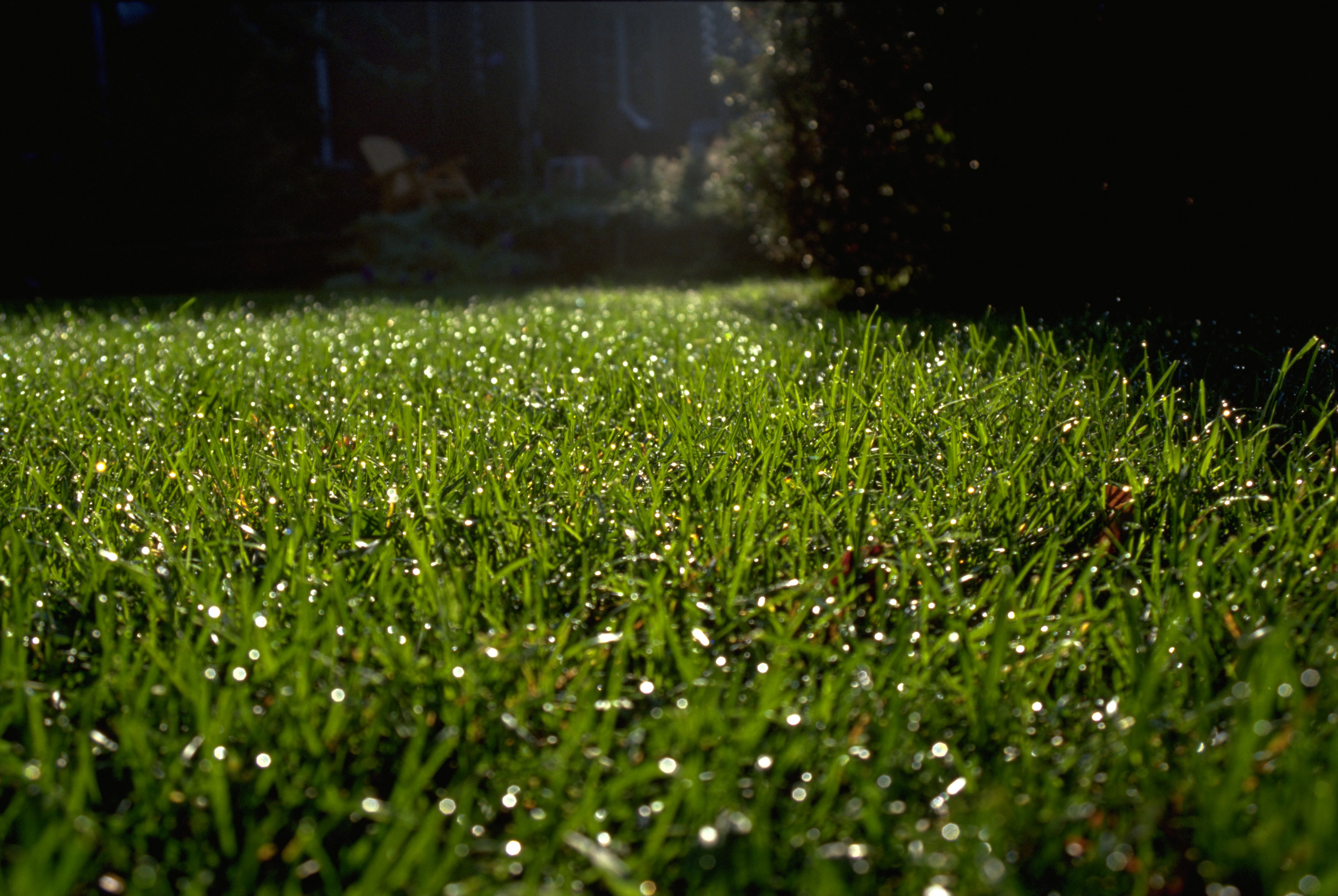 Lawn calendar | Space for life