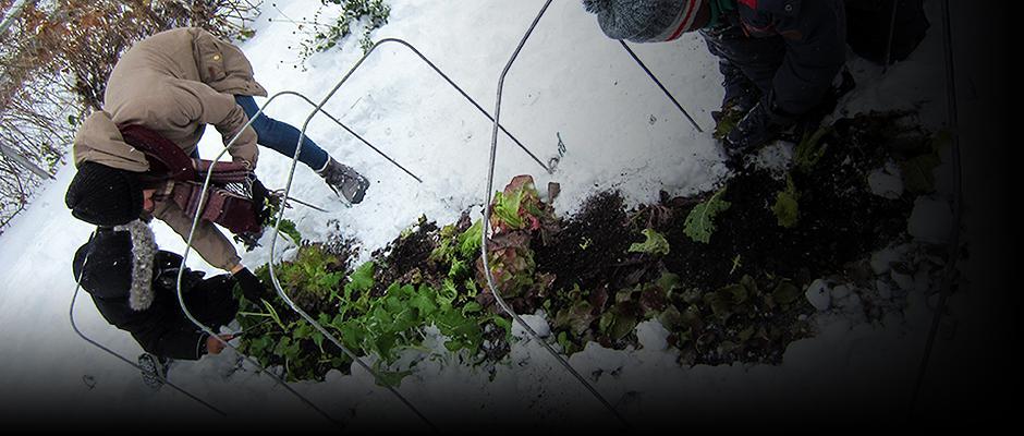 Do you garden when it's cold outside?