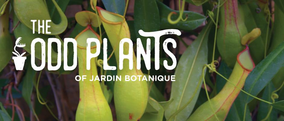 The odd plants of Jardin botanique