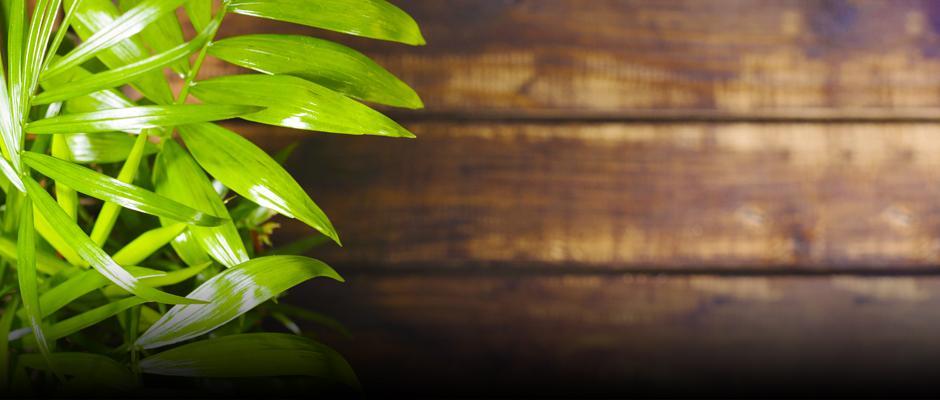 Indoor plants - carrousel