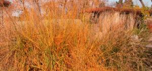 Grasses in fall