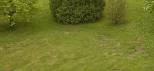 Espaces dénudés sur la pelouse