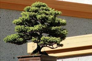 Courtyard of Miniaturized North American Trees