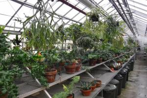 Phytoprotection in the Jardin botanique's greenhouses: the guardian angel of thousands of species