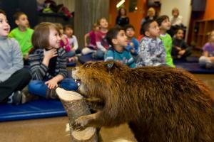 Les élèves découvrent le monde des castors.