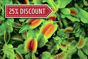 The Odd Plants of Mrs Z