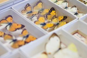 Identification de papillons