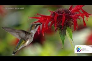 What kind of plants attract hummingbirds?
