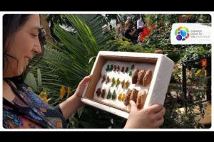 The job of scientific recreational activities coordinator at the Montreal Insectarium