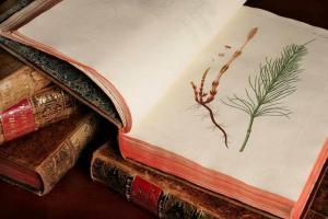 Collection de livres anciens du Jardin botanique : Flora Danica