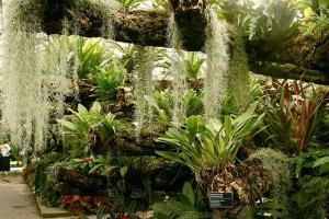 Tropical Rainforest Greenhouse