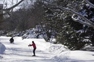 Cross-country skiing at the Botanical Garden