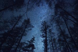 Nuit au Jardin