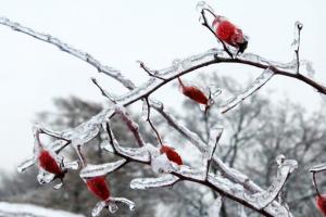 Questions populaires - hiver