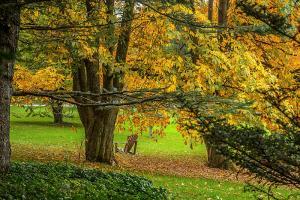 Le Jardin botanique à l'automne