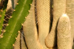 Textures and shapes of cacti in the Arid Regions Conservatory.