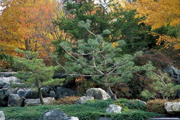 Les plantes du Jardin japonais