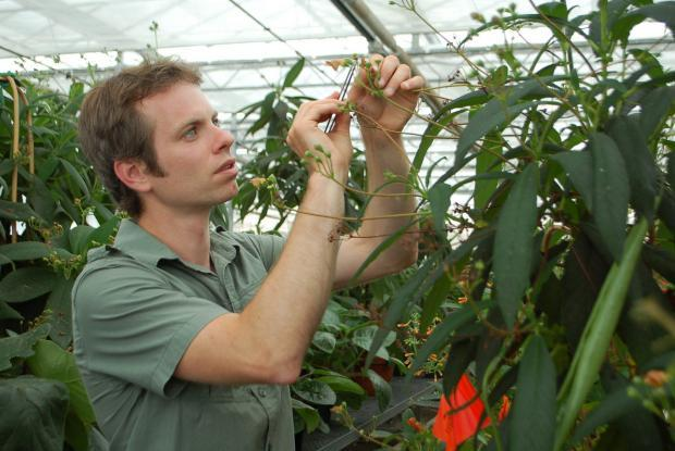 Plant pollination by hand in the Botanical Garden greenhouses.