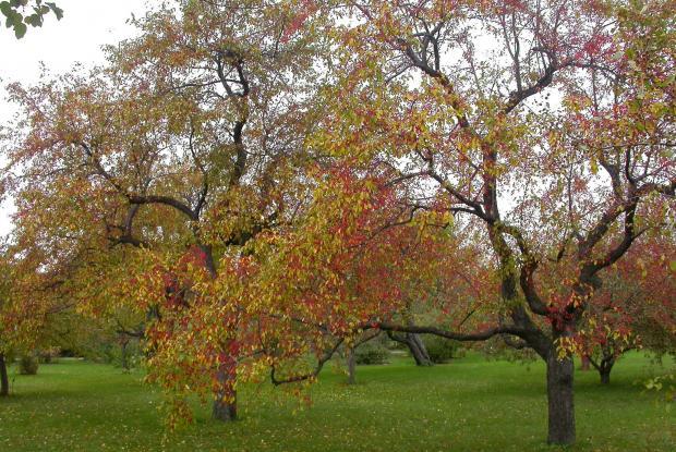 Autumn-Trees and shrubs.