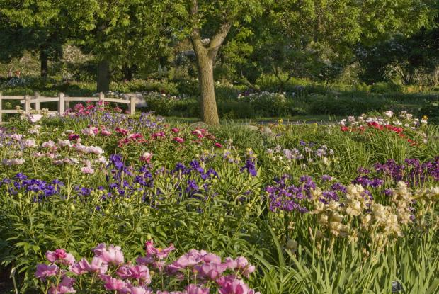 Un jardin pour les bouquets | Espace pour la vie