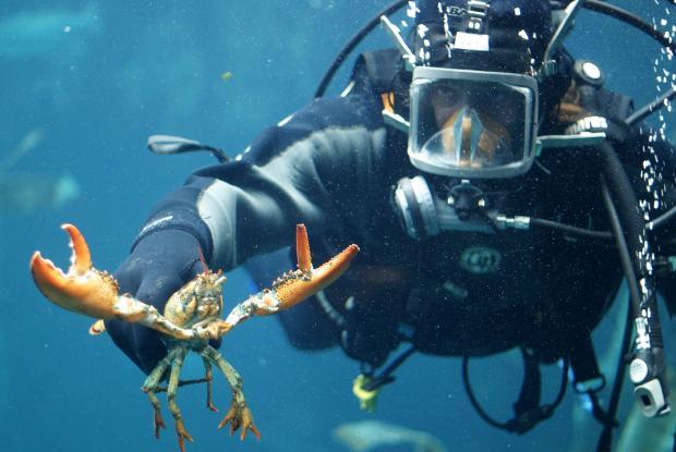 Diver at work.