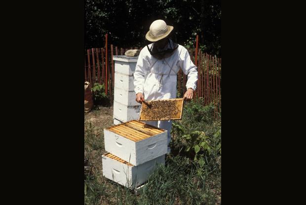 Beekeeper at a beehive, Québec, Canada.